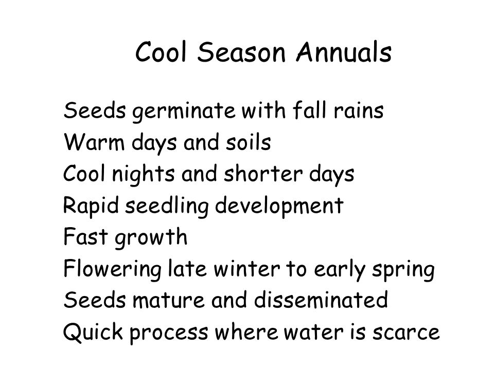 Cool Season Annuals Seeds germinate with fall rains Warm days and soils Cool nights and shorter days Rapid seedling development Fast growth Flowering late winter to early spring Seeds mature and disseminated Quick process where water is scarce