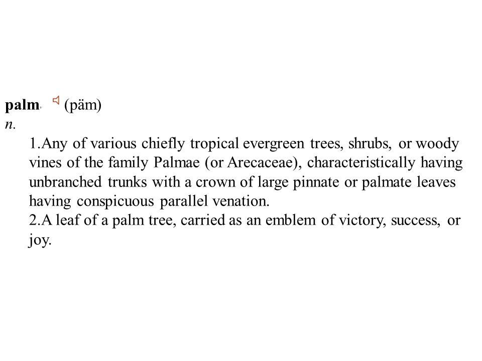 palm 2 (päm) n.
