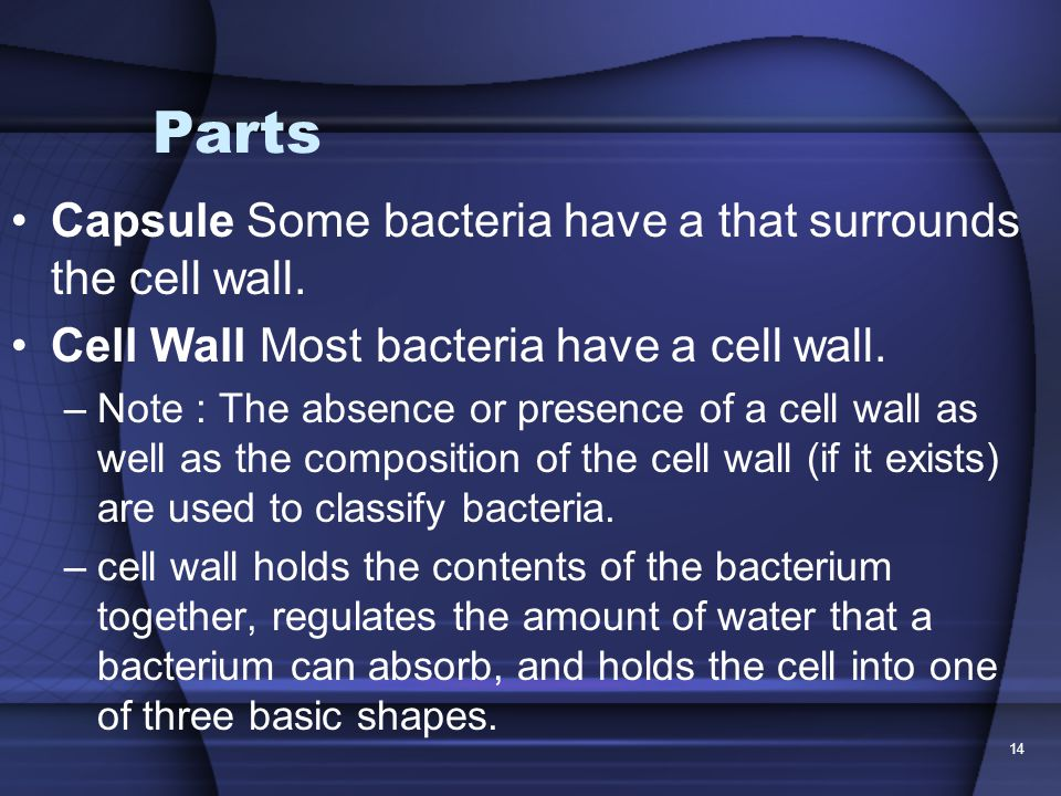 Parts Capsule Some bacteria have a that surrounds the cell wall.