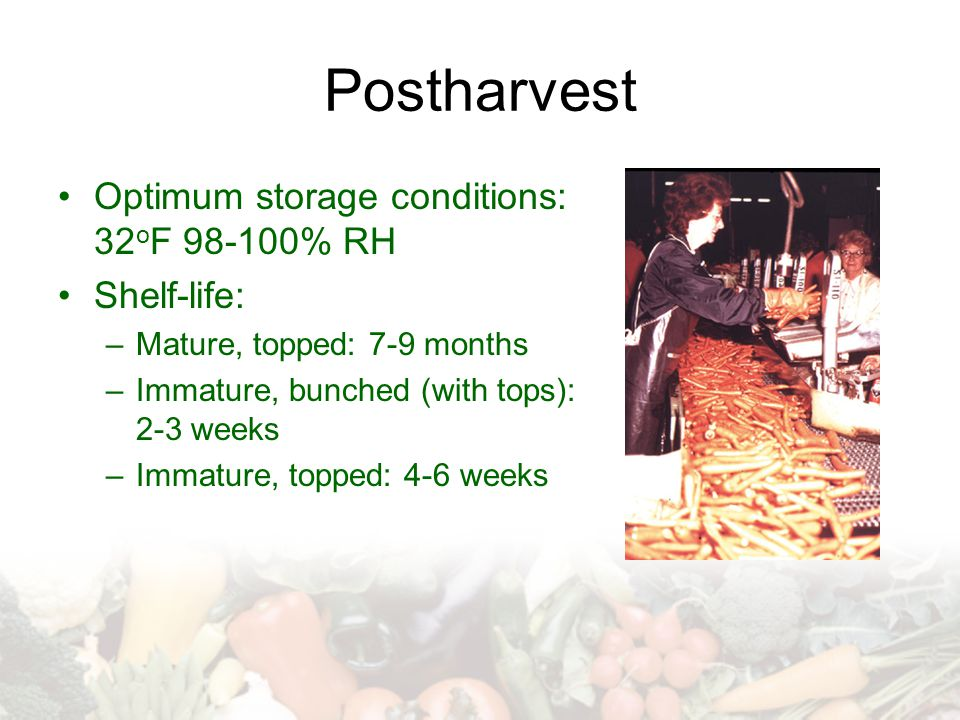 Postharvest Optimum storage conditions: 32 o F 98-100% RH Shelf-life: –Mature, topped: 7-9 months –Immature, bunched (with tops): 2-3 weeks –Immature,