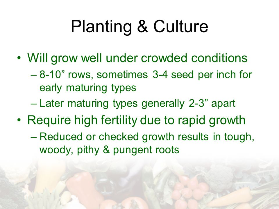 "Planting & Culture Will grow well under crowded conditions –8-10"" rows, sometimes 3-4 seed per inch for early maturing types –Later maturing types gen"