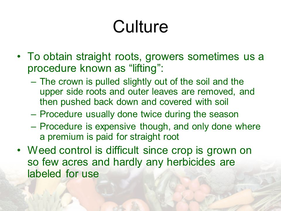 "Culture To obtain straight roots, growers sometimes us a procedure known as ""lifting"": –The crown is pulled slightly out of the soil and the upper sid"