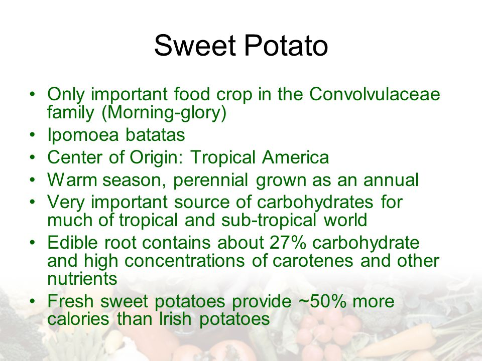 Sweet Potato Only important food crop in the Convolvulaceae family (Morning-glory) Ipomoea batatas Center of Origin: Tropical America Warm season, per
