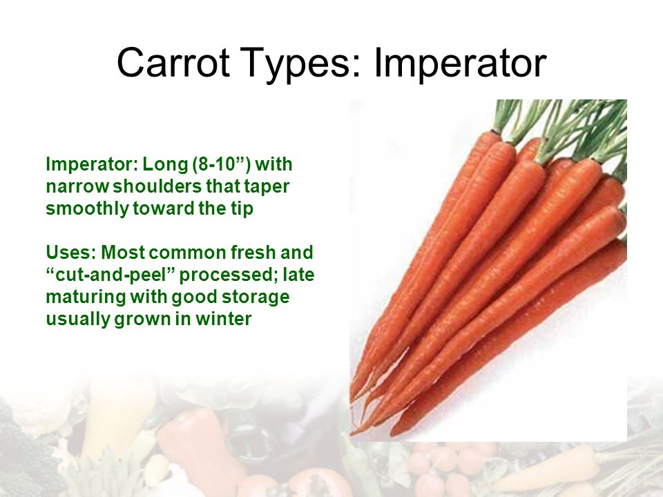 "Carrot Types: Imperator Imperator: Long (8-10"") with narrow shoulders that taper smoothly toward the tip Uses: Most common fresh and ""cut-and-peel"" pr"