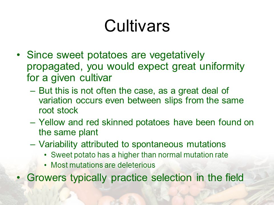 Cultivars Since sweet potatoes are vegetatively propagated, you would expect great uniformity for a given cultivar –But this is not often the case, as