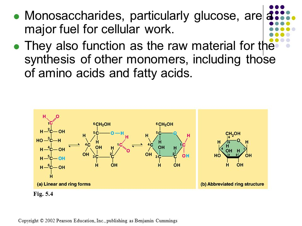 Monosaccharides, particularly glucose, are a major fuel for cellular work.