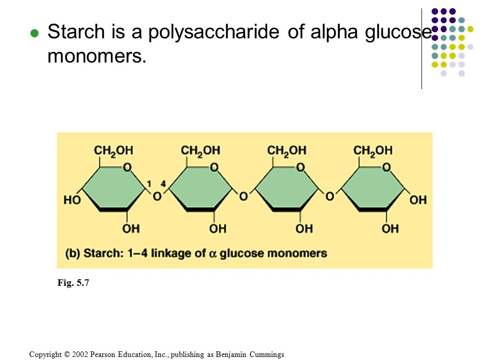 Copyright © 2002 Pearson Education, Inc., publishing as Benjamin Cummings Fig. 5.7 Starch is a polysaccharide of alpha glucose monomers.