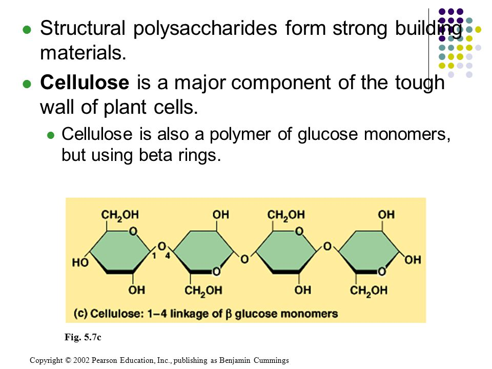 Structural polysaccharides form strong building materials.