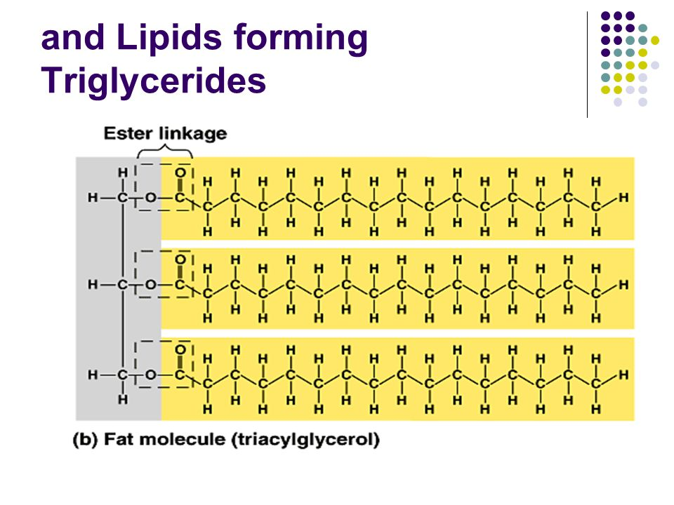 and Lipids forming Triglycerides