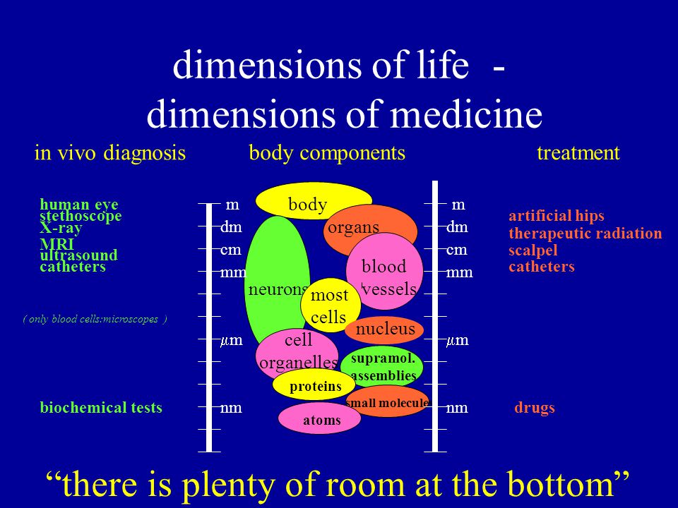 body dimensions of life - dimensions of medicine organs blood vessels neurons most cells nucleus cell organelles supramol.