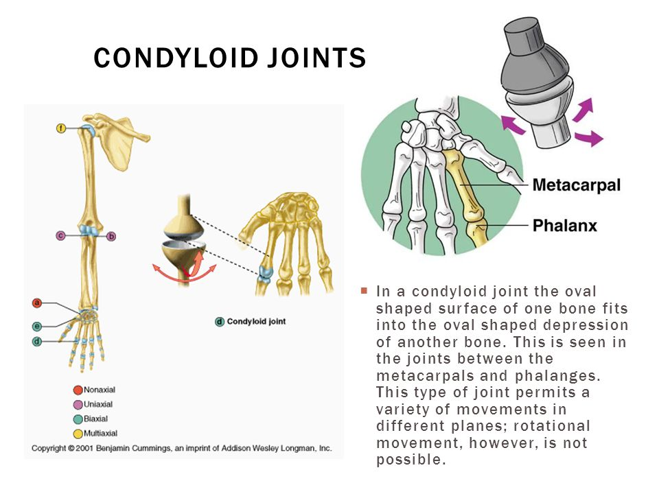  In a condyloid joint the oval shaped surface of one bone fits into the oval shaped depression of another bone. This is seen in the joints between th