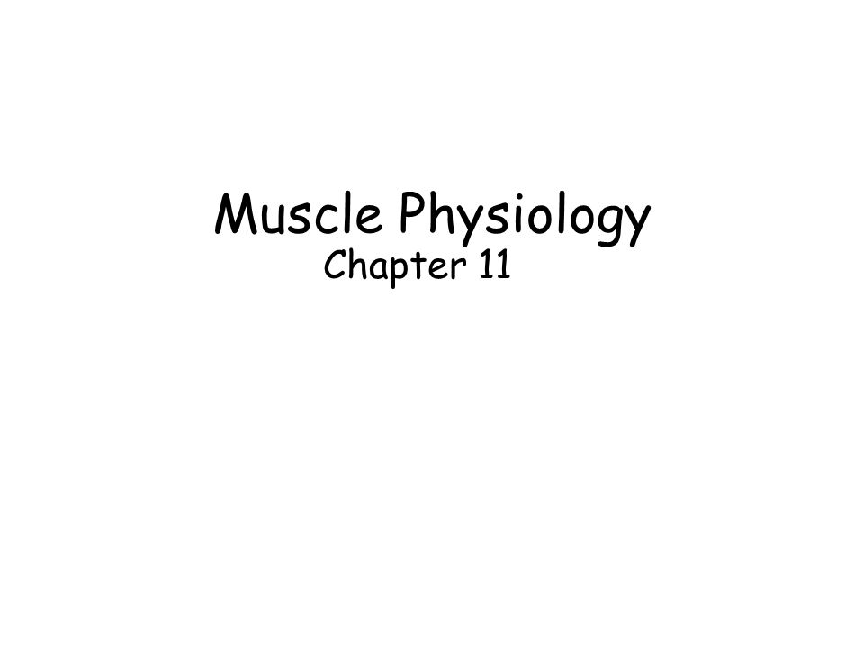 Muscle Physiology Chapter 11