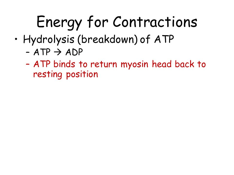 Energy for Contractions Hydrolysis (breakdown) of ATP –ATP  ADP –ATP binds to return myosin head back to resting position