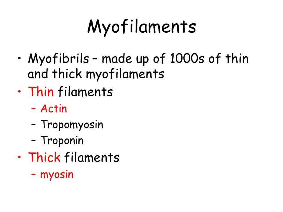 Myofilaments Myofibrils – made up of 1000s of thin and thick myofilaments Thin filaments –Actin –Tropomyosin –Troponin Thick filaments –myosin