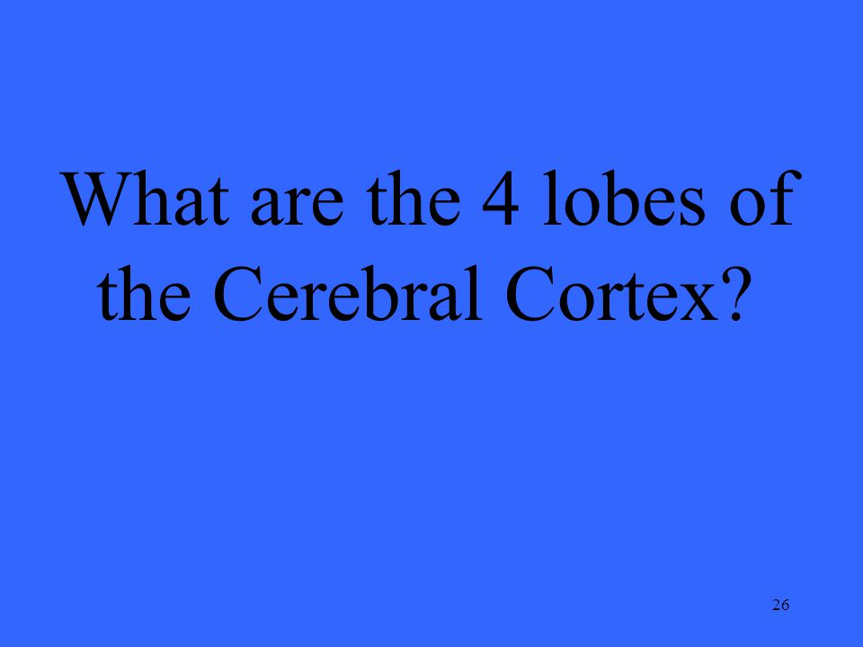 26 What are the 4 lobes of the Cerebral Cortex?