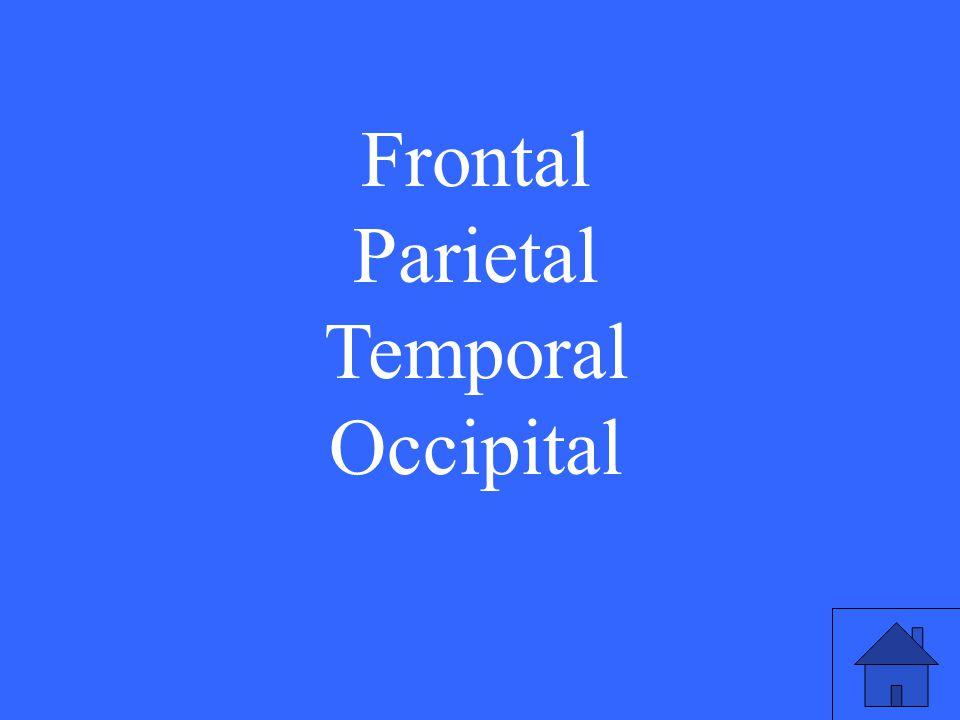 27 Frontal Parietal Temporal Occipital