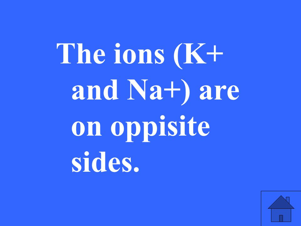 33 The ions (K+ and Na+) are on oppisite sides.