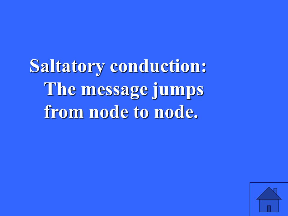 41 Saltatory conduction: The message jumps from node to node.