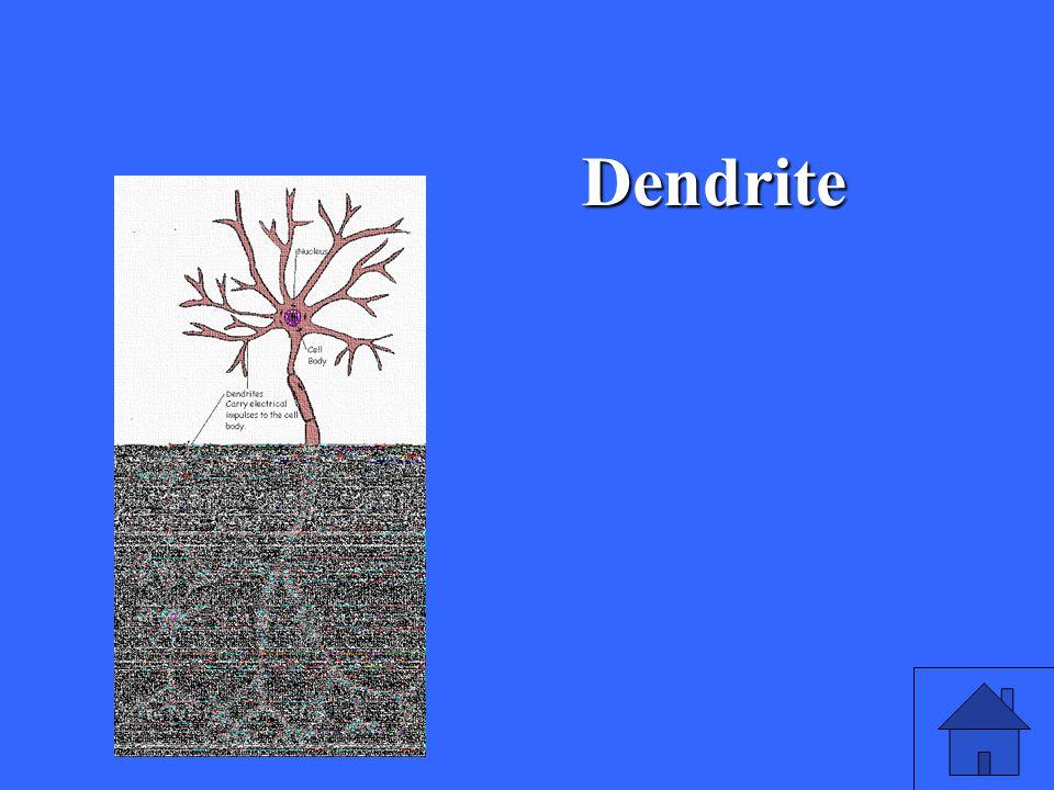 5 Dendrite