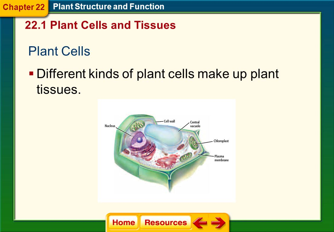 Click on a lesson name to select. Chapter 22 Plant Structure and Function Section 1: Plant Cells and Tissues Section 2: Roots, Stems, and Leaves Secti
