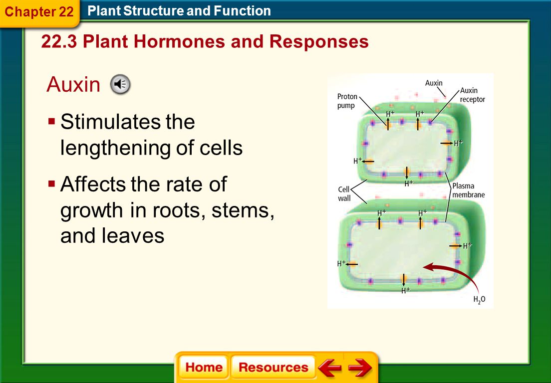 Plant Hormones  Plant hormones can affect cell division, growth, or differentiation. 22.3 Plant Hormones and Responses Plant Structure and Function 
