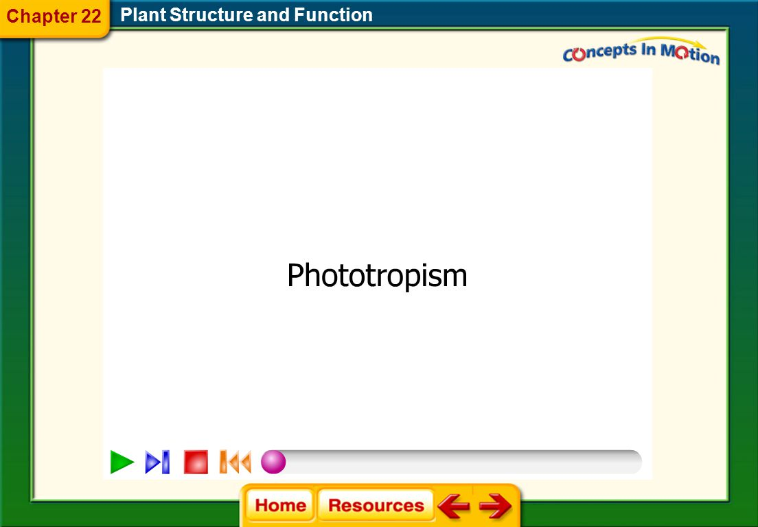 Plant Structure and Function Chapter 22