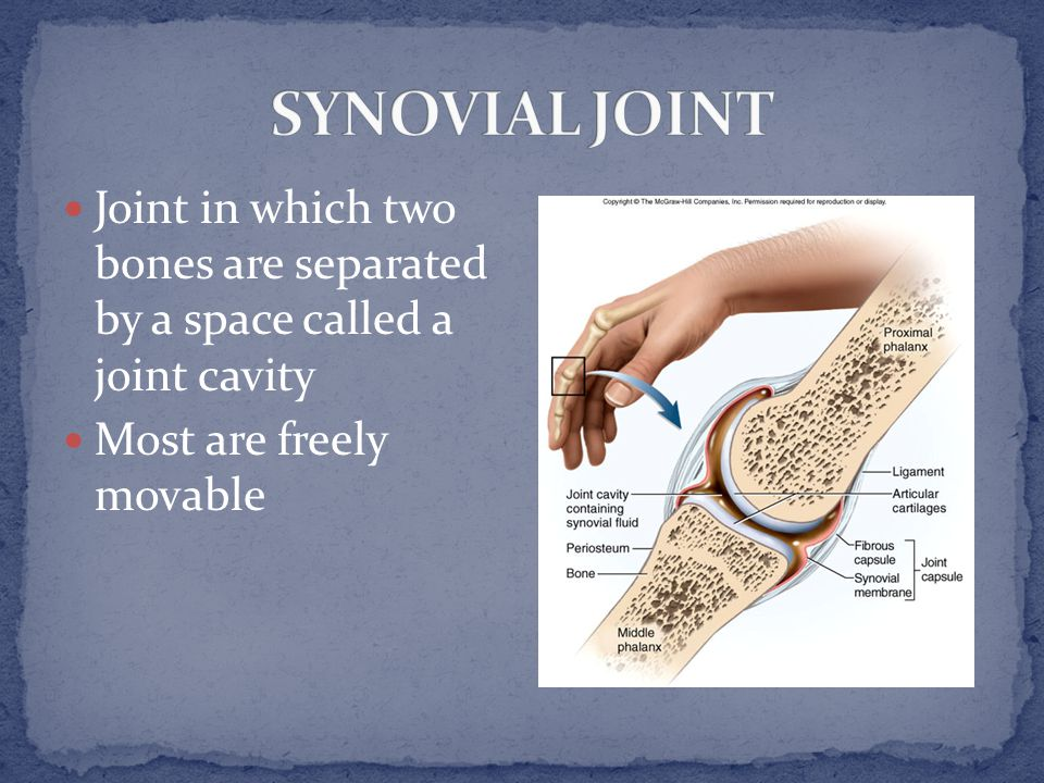 the fluid sacs and synovial pockets that surround and sometimes communicate with the joint cavity.