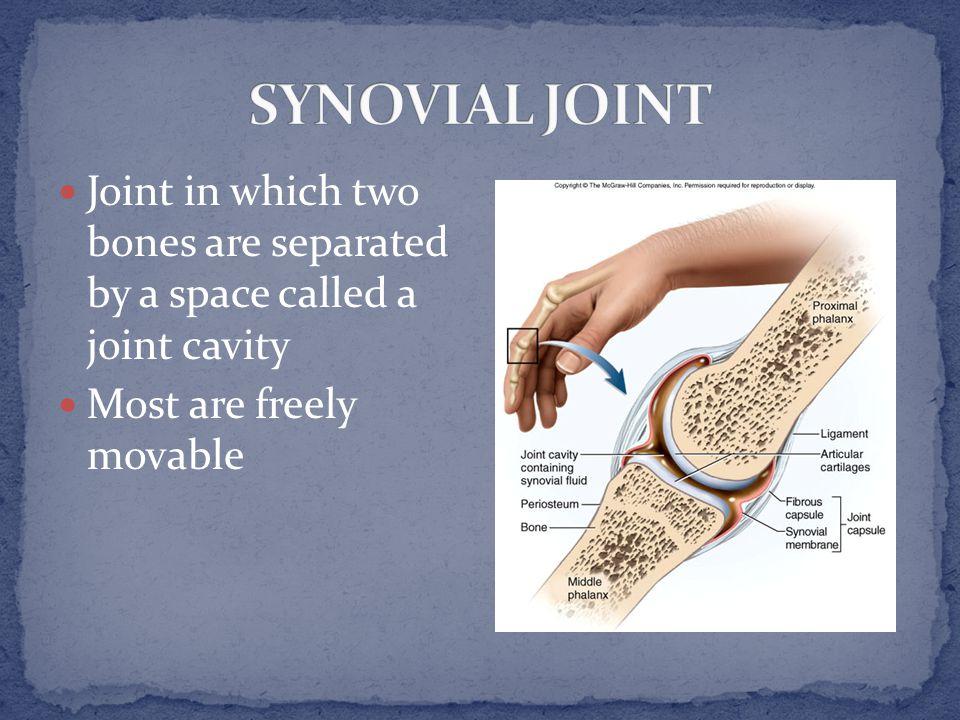 Articular capsule Synovial membrane and fluid Articular cartilage Articular discs and menisci Tendon Ligament Fatty pad Bursae
