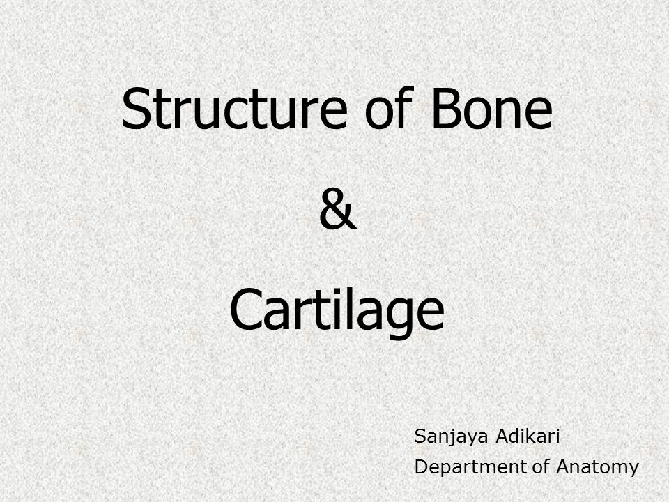 Structure of Bone & Cartilage Sanjaya Adikari Department of Anatomy