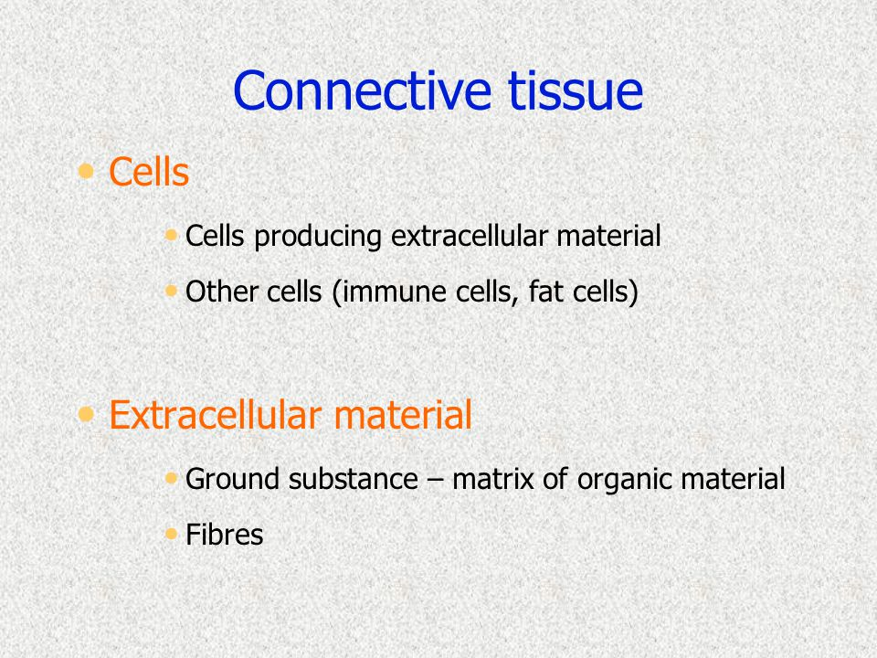 Connective tissue Cells Cells producing extracellular material Other cells (immune cells, fat cells) Extracellular material Ground substance – matrix