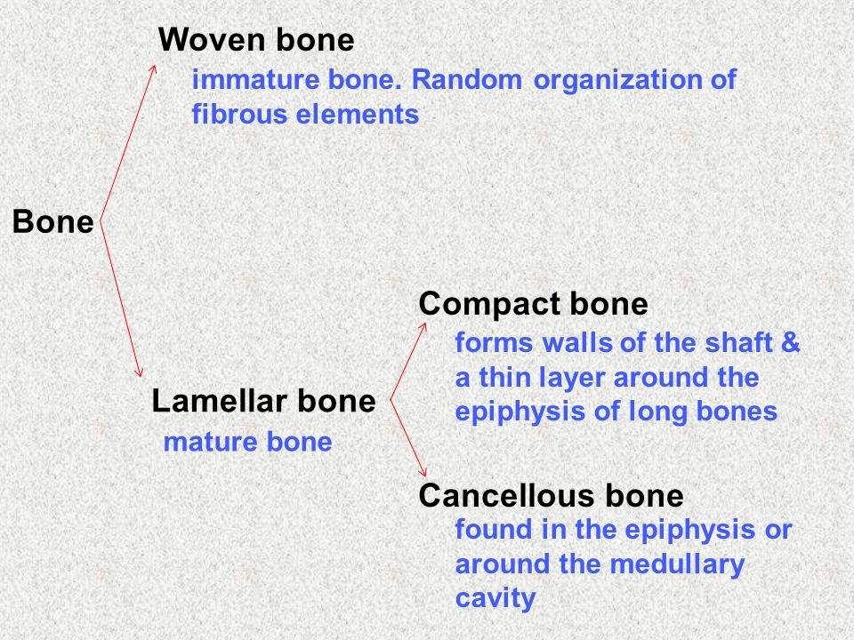 Bone Woven bone Lamellar bone Compact bone Cancellous bone immature bone. Random organization of fibrous elements mature bone forms walls of the shaft