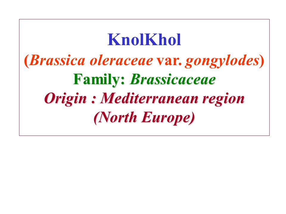 ( Family: Brassicaceae Origin : Mediterranean region (North Europe) KnolKhol (Brassica oleraceae var. gongylodes) Family: Brassicaceae Origin : Medite