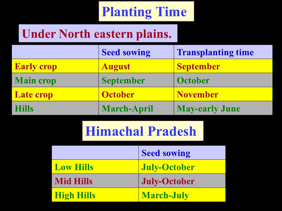 Planting Time Seed sowingTransplanting time Early cropAugustSeptember Main cropSeptemberOctober Late cropOctoberNovember HillsMarch-AprilMay-early June Under North eastern plains.