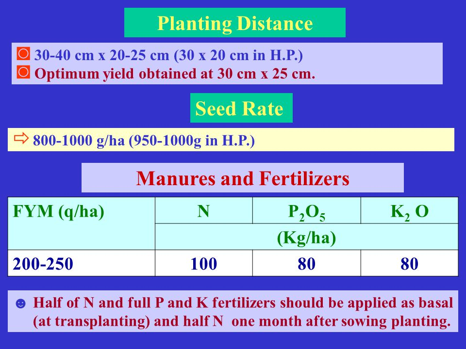 Seed Rate  800-1000 g/ha (950-1000g in H.P.) ◙ 30-40 cm x 20-25 cm (30 x 20 cm in H.P.) ◙ Optimum yield obtained at 30 cm x 25 cm.