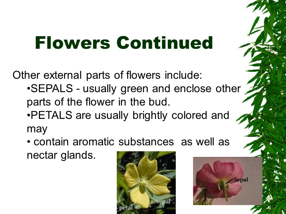 Flowers Continued Other external parts of flowers include: SEPALS - usually green and enclose other parts of the flower in the bud. PETALS are usually