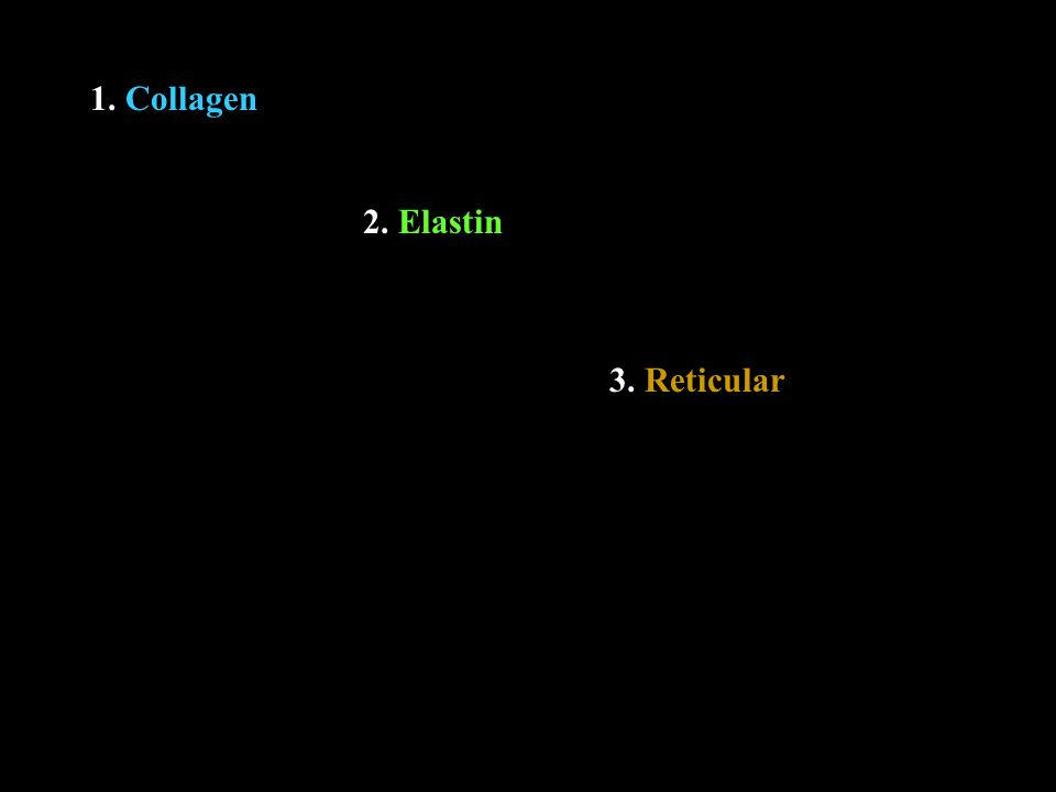 1. Collagen 2. Elastin 3. Reticular