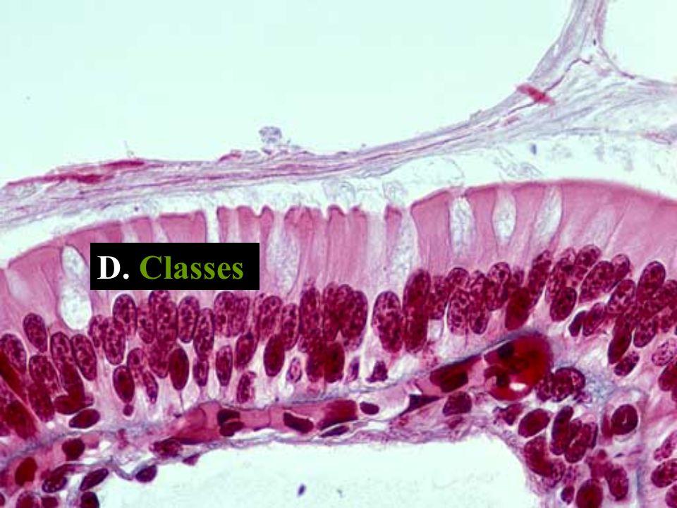D. Classes