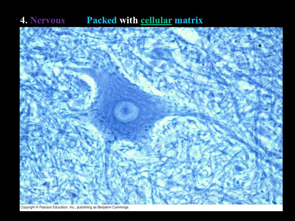 II. Epithelial Tissue A. Defining Characteristics