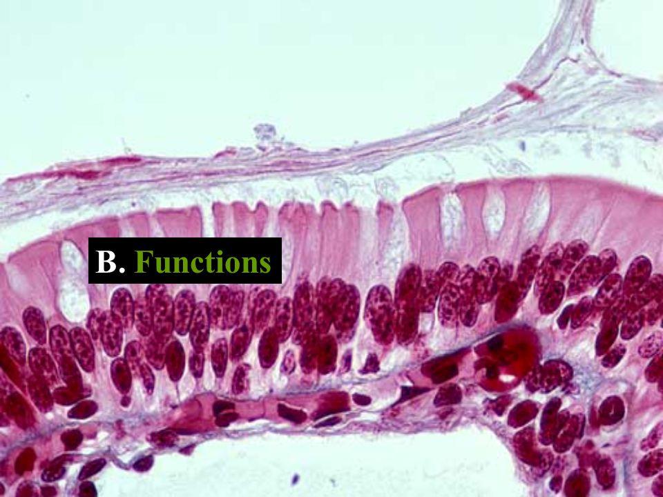 B. Functions