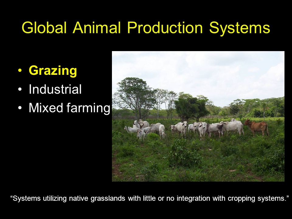 Global Animal Production Systems Grazing Industrial Mixed farming Systems utilizing native grasslands with little or no integration with cropping systems.