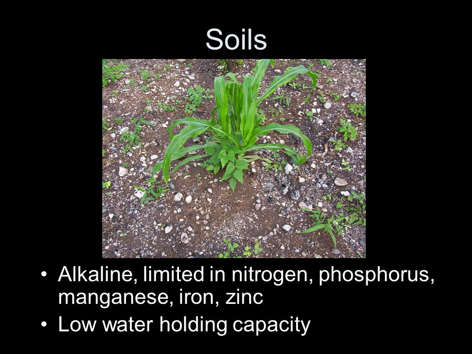 Soils Alkaline, limited in nitrogen, phosphorus, manganese, iron, zinc Low water holding capacity