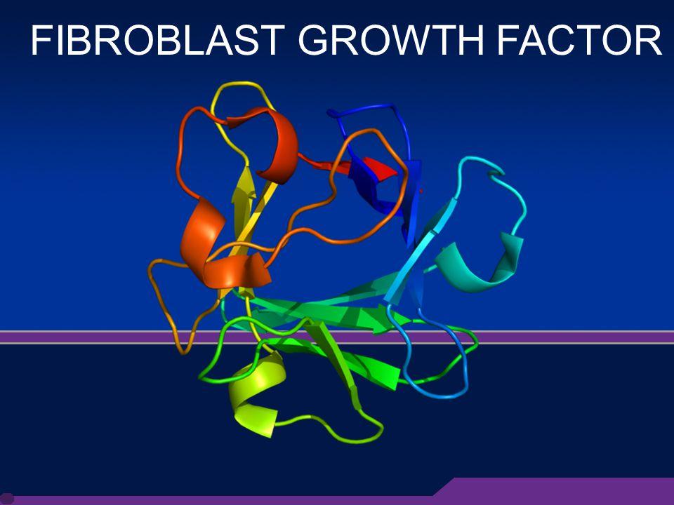 3 FIBROBLAST GROWTH FACTOR