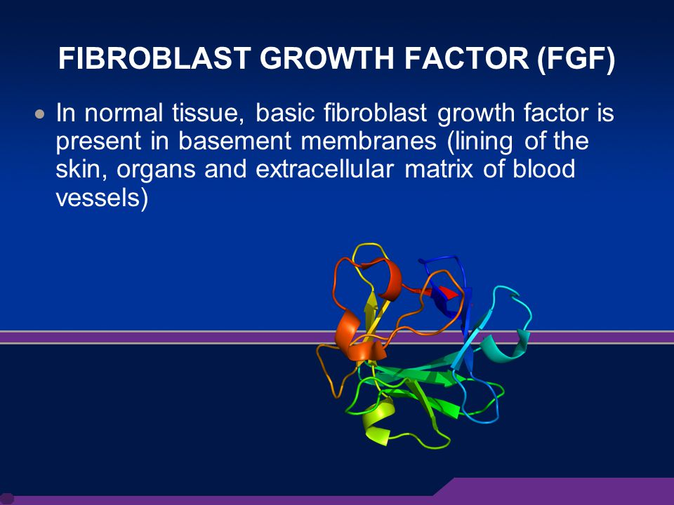 6 FIBROBLAST GROWTH FACTOR (FGF)  In normal tissue, basic fibroblast growth factor is present in basement membranes (lining of the skin, organs and extracellular matrix of blood vessels)