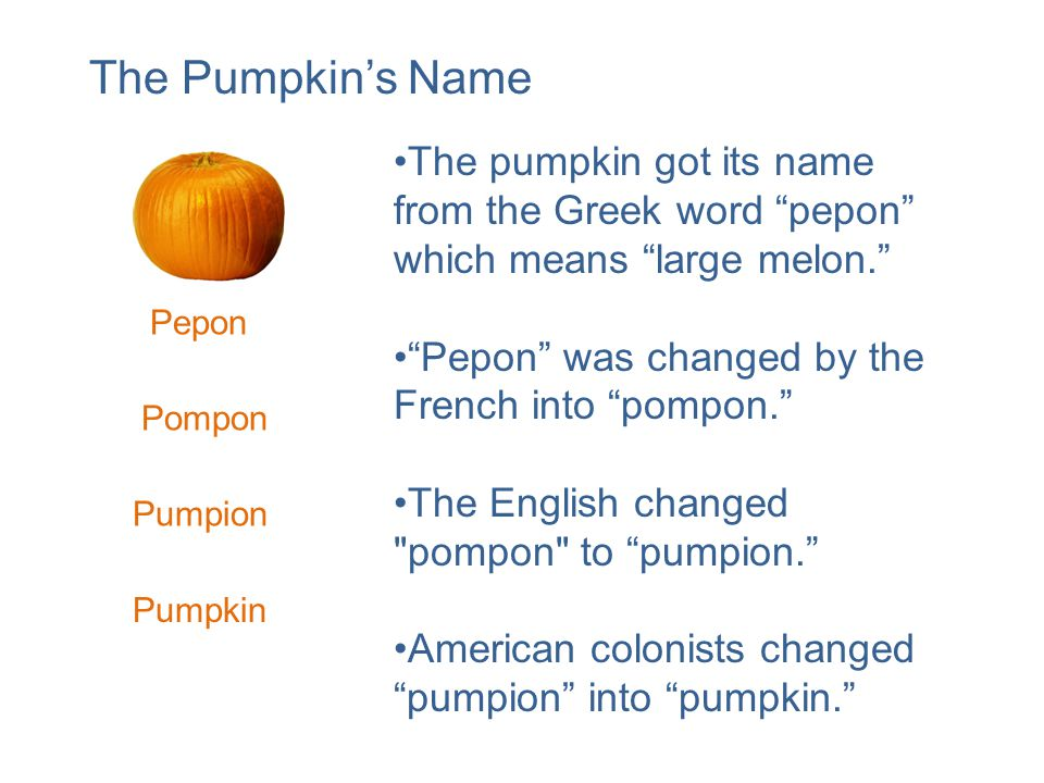 The pumpkin got its name from the Greek word pepon which means large melon. Pepon was changed by the French into pompon. The English changed pompon to pumpion. American colonists changed pumpion into pumpkin. Pepon Pompon Pumpion Pumpkin The Pumpkin's Name