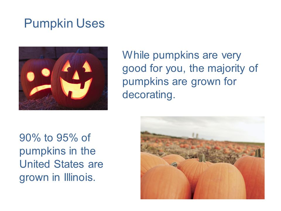 While pumpkins are very good for you, the majority of pumpkins are grown for decorating.
