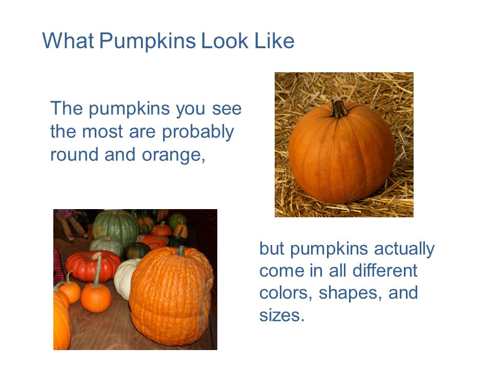 but pumpkins actually come in all different colors, shapes, and sizes.