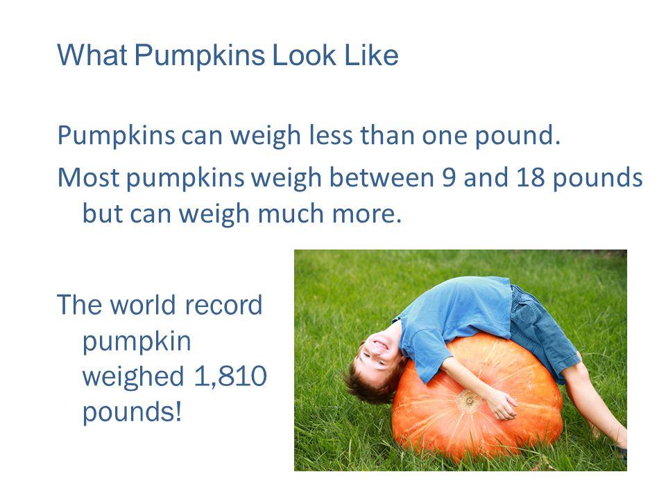 Seed Vine Flower Small Ball Green Pumpkin Ready! Pumpkin Life Cycle