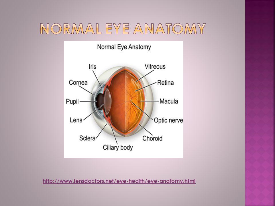 http://www.lensdoctors.net/eye-health/eye-anatomy.html