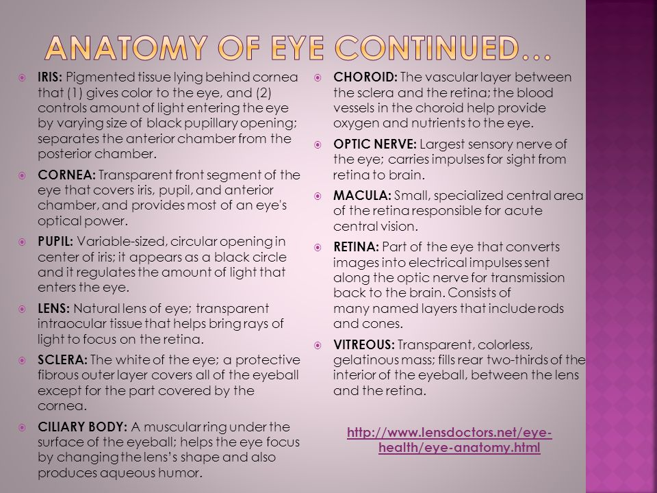  IRIS: Pigmented tissue lying behind cornea that (1) gives color to the eye, and (2) controls amount of light entering the eye by varying size of black pupillary opening; separates the anterior chamber from the posterior chamber.