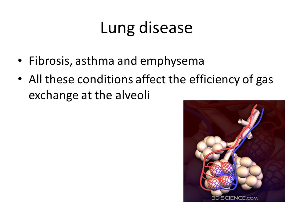 Lung disease Fibrosis, asthma and emphysema All these conditions affect the efficiency of gas exchange at the alveoli